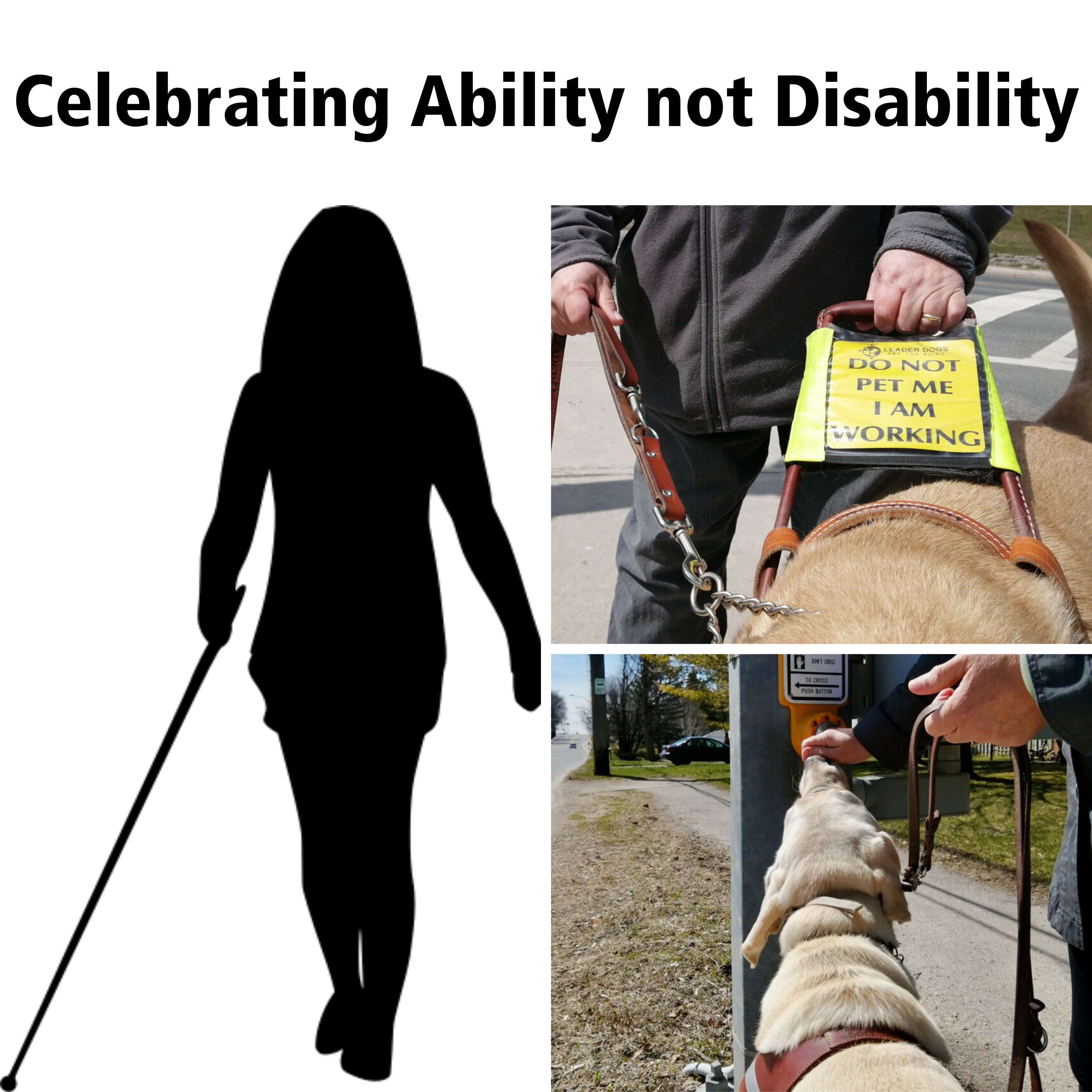 Celebrating Ability Not Disability